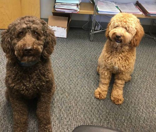 Dogs Visiting the Office